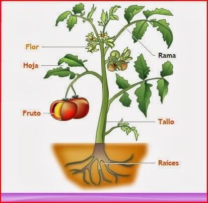 Anatomia De La Planta ~ Jardin de casa
