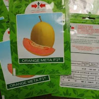 Benih, Bibit, Tanaman, Melon, Orange Meta, Daging Orange, Taham Virus, Harga Mahal, Panen Super, East West Seed, Cap Panah Merah