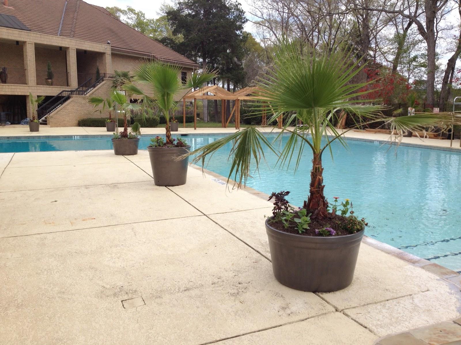 Potted Plants For Around Pool Joy Studio Design Gallery