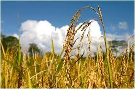 Pembangunan Pertanian Dan Perekonomian Pedesaan Melalui Kemitraan