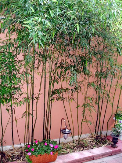 Bamboo Oasis1