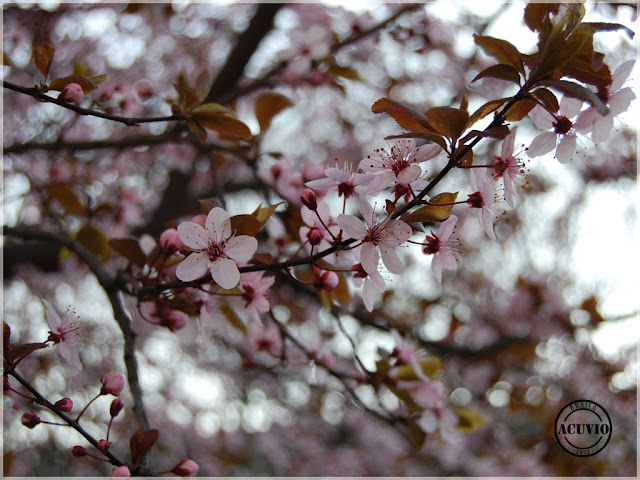 Brăila Duminica Floriilor