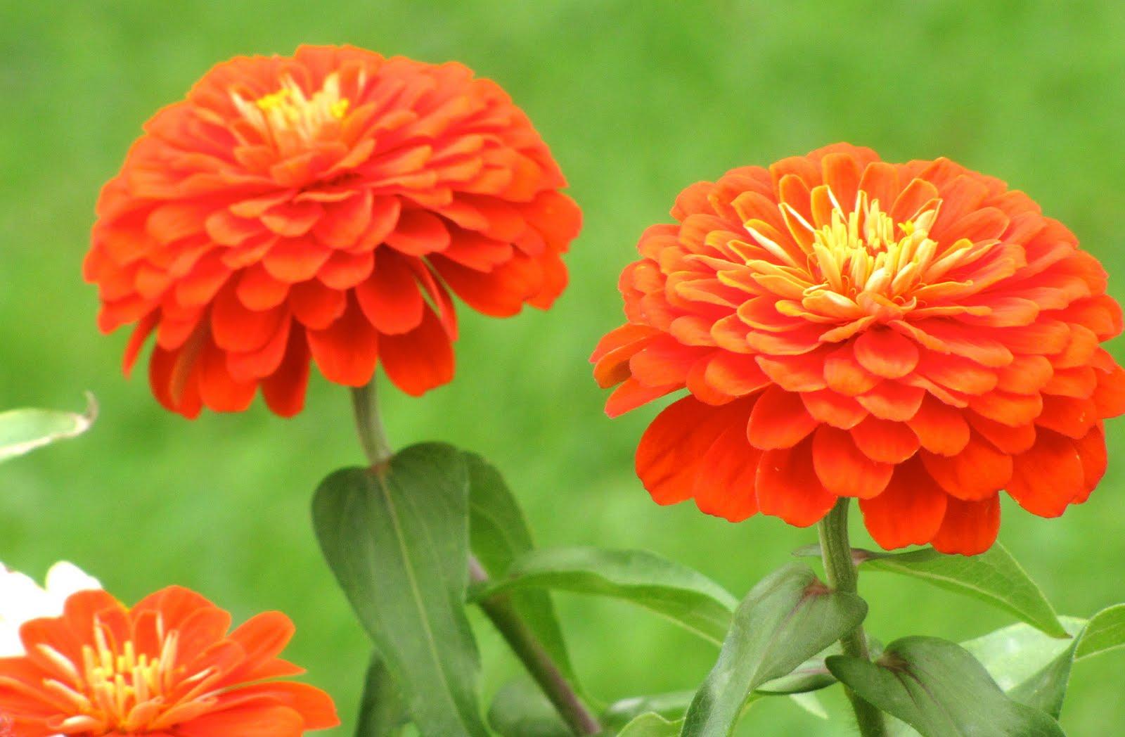Cosas de palmichula las ultimas flores del verano - Flores de verano ...