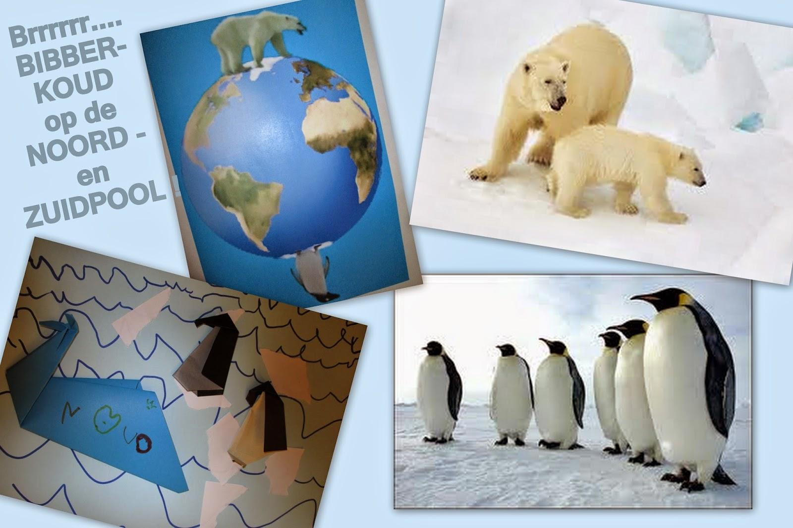 dieren op de zuidpool