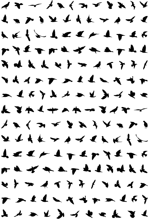 Mis amigas las palomas: Fotos palomas mensajeras