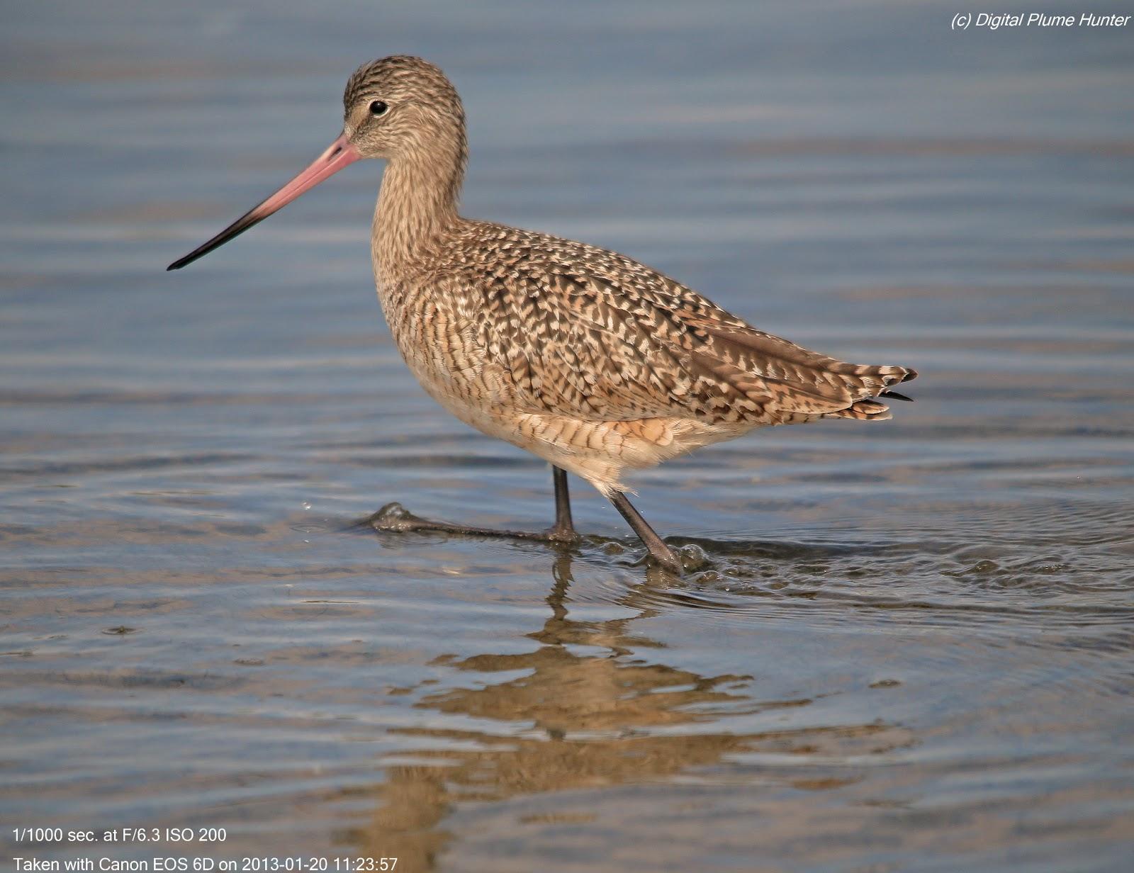 Best 28 south shore bird club of shorebird s t shirt for 3 little birds salon