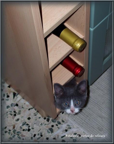 p tales et pattes de velours mimi notre petit souris s 39 en est all e. Black Bedroom Furniture Sets. Home Design Ideas