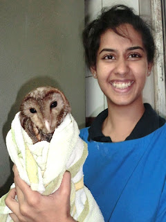 goa owl rescue from glue trap