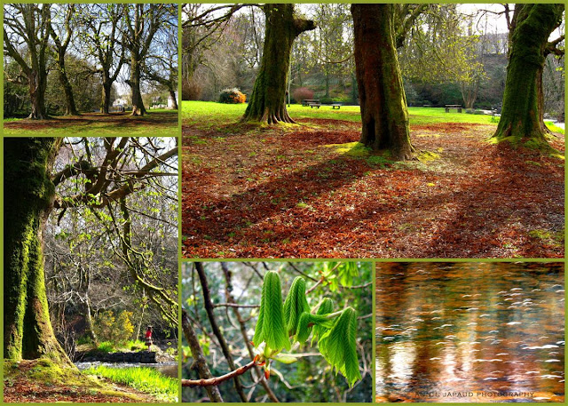 image collage from early spring