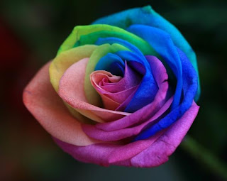 rainbow+rose+2 A Gift of Survival........