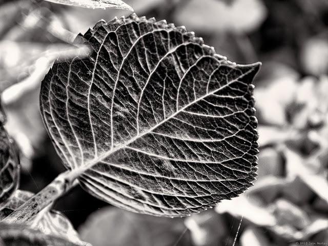 Week 31: Nature