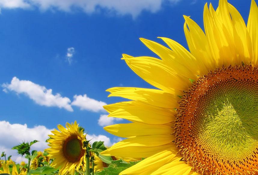jardim flores que gostam de sol:Blog do Meio Ambiente: Flores que gostam de muito sol são opções
