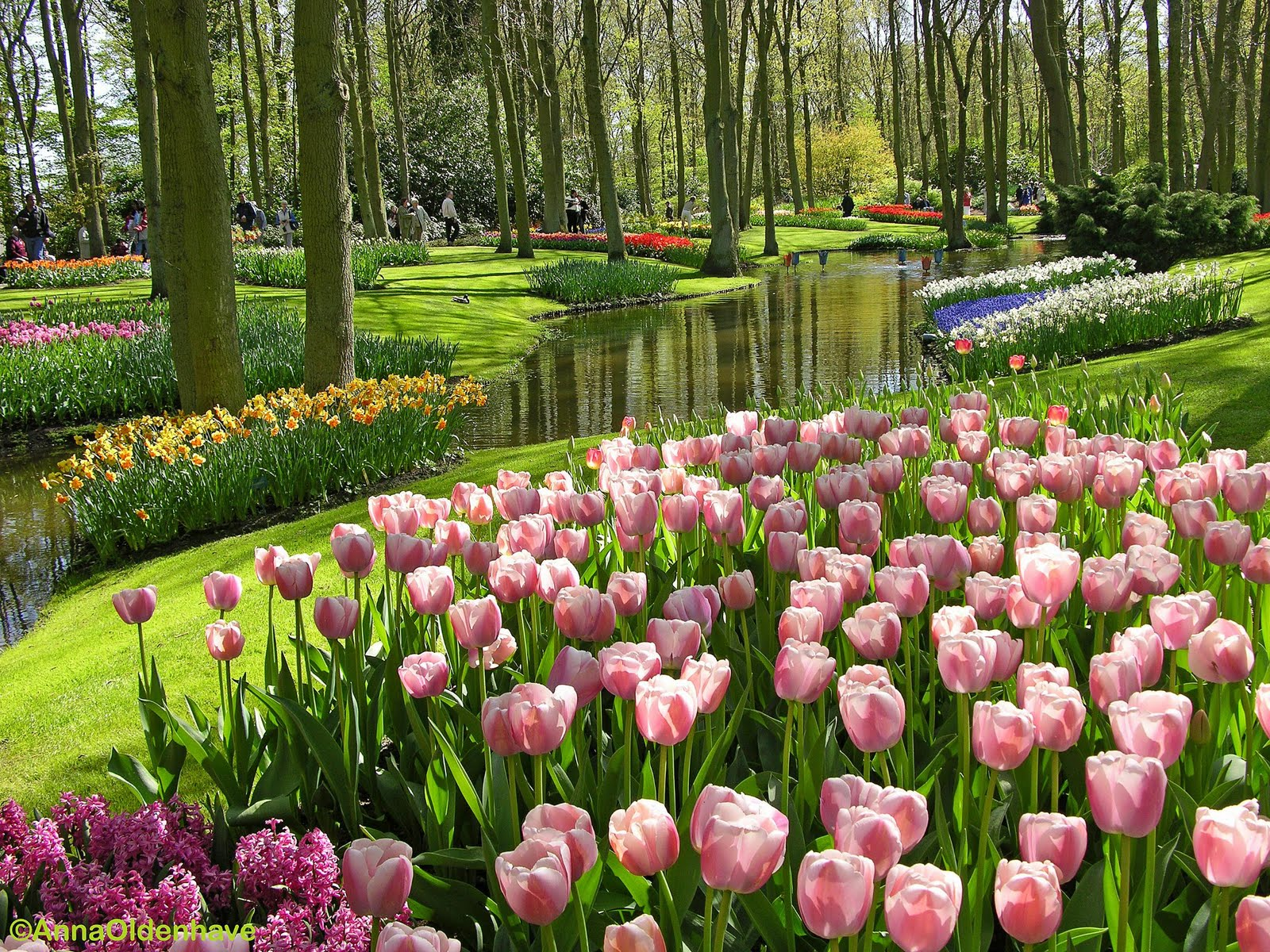 Gambar-gambar bunga yang indah Paling Cantik dipandang