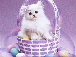 2013 Top 25 Cure Easter Day Wallpapers for Android Phones ...