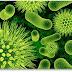 Las bacterias ganan peso en las dietas: el secreto está en la flora intestinal