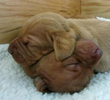 Mini puppy pile!
