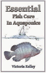 Essential Fish Care In Aquaponics