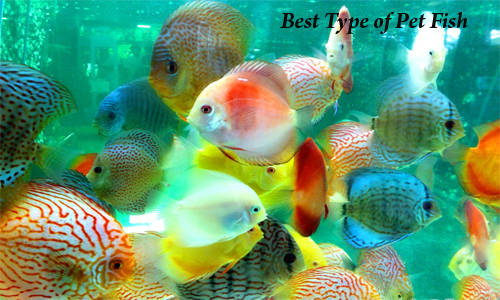 Home pets page home pets how to select the finest kind for Fish as pets