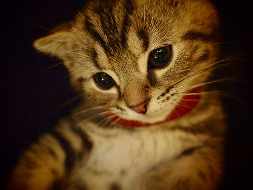 Cute Kitty with some confusion