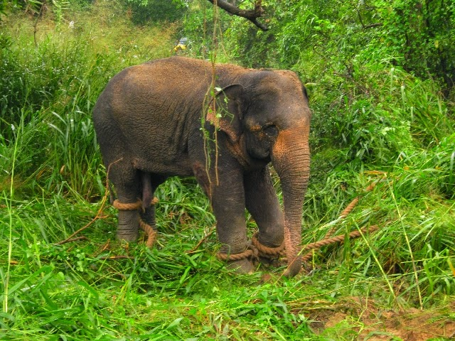 ... elephant attack - Photos : Gossip Lanka News And Sri Lanka Hot News