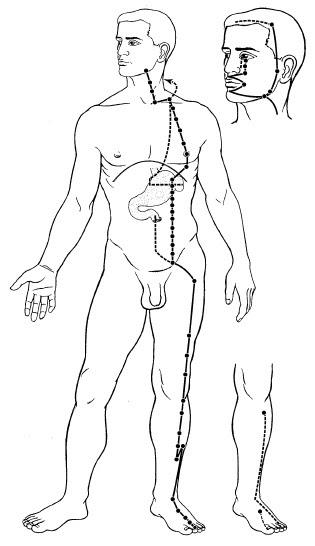Gli intestini e la vita la ragione fanno male a donne