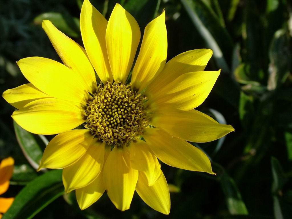 yellow flower pictures - photo #8