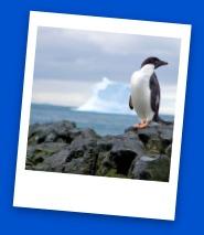 Sassy Penguin