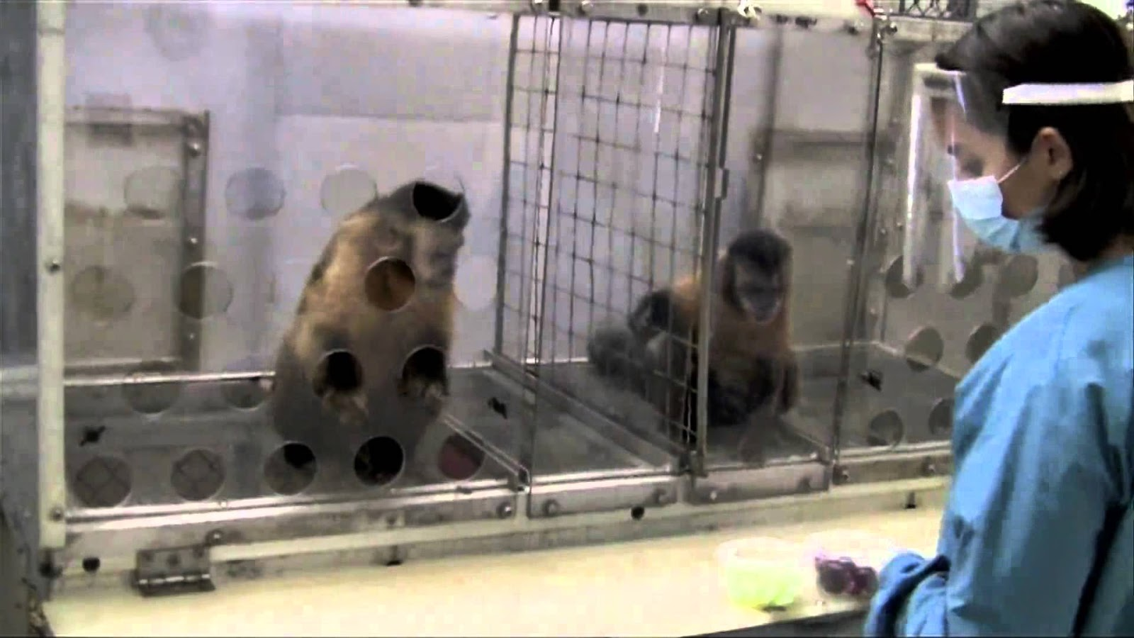 2 Monkeys Were Paid Unequally; See What Happens Next
