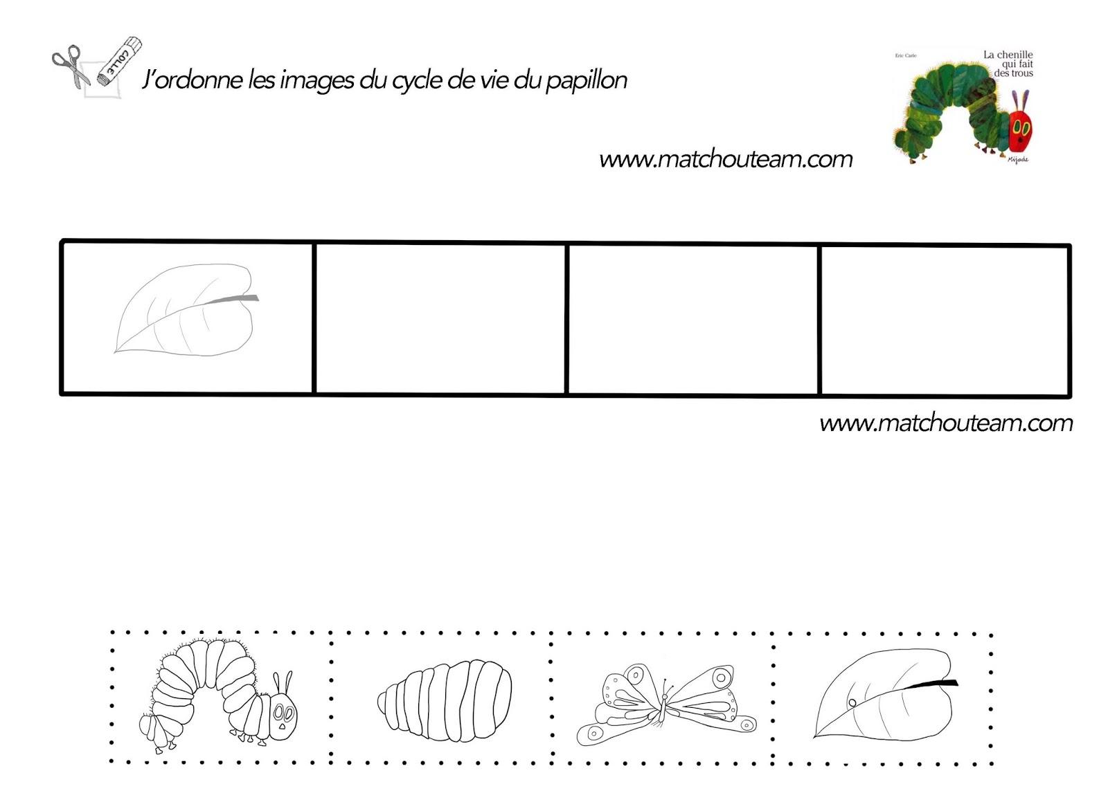 cycle de vie du papillon la chenille qui fait des trous fiche à imprimer