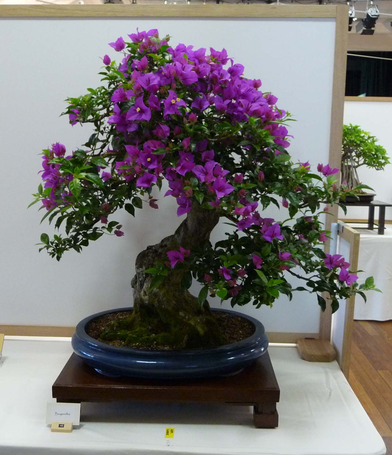 Redlands Bonsai Society Visit To The Sunshine Coast Bonsai Show
