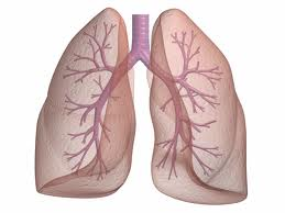 Identify Lung Disease