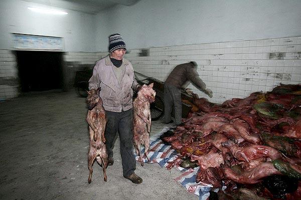Para los que hablan pavadas de q los chinos se comen perros