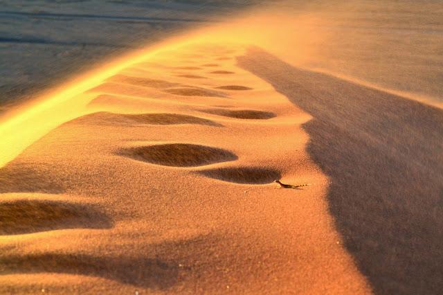Gekko on top of Dune 45, Sossusvlei