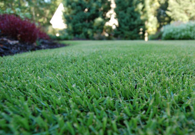 how to cut st augustine grass