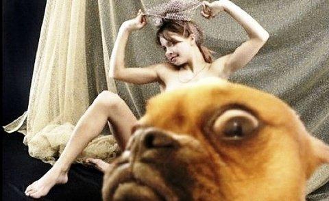 photobomb animal