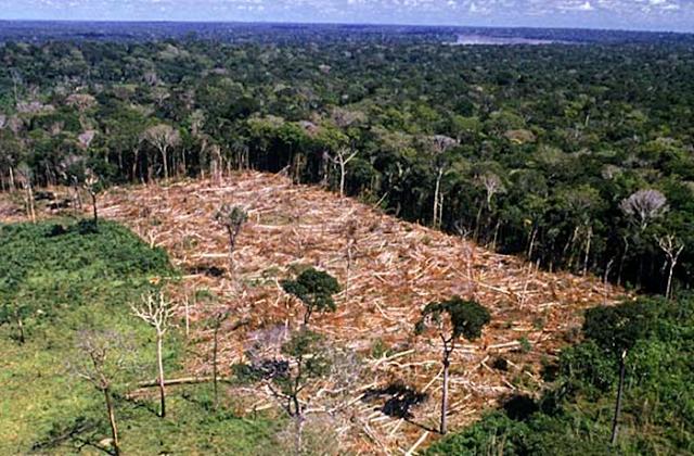 Desmatamentos