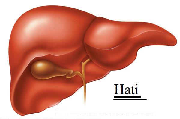 Cara Mengatasi Lemas Pada Penyakit Liver