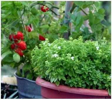 Photo credit - Garden tower vertical container garden ...