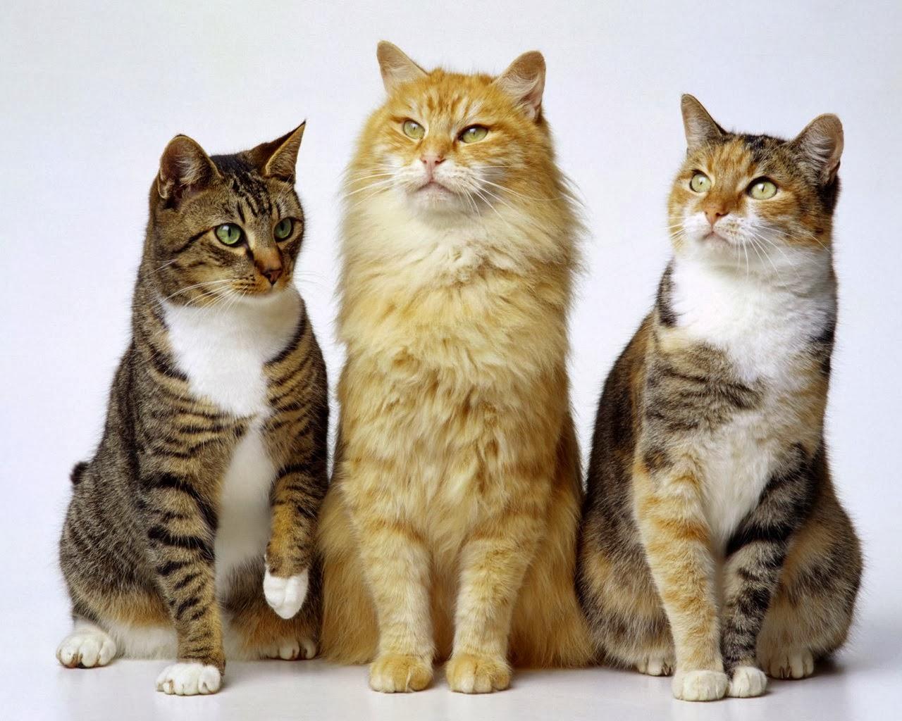 Keep Kitten Away From Old Cat