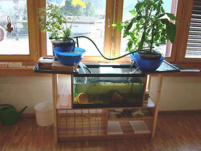 Aquaponics system designs for Aquaponics fish tank