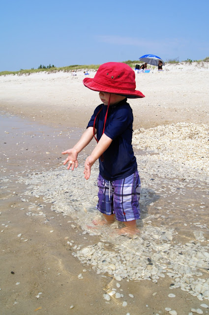 toddler throwing clams back into the atlantic ocean