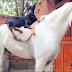 Η τρυφερή σχέση ενός ντόπερμαν και ενός αλόγου...