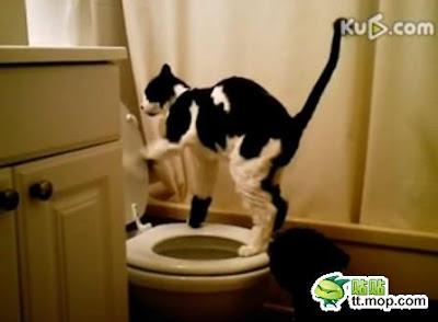 Keren! Kucing pun Buang Kotoran di WC