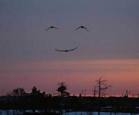 formasi-burung-paling-keren-langit-terse