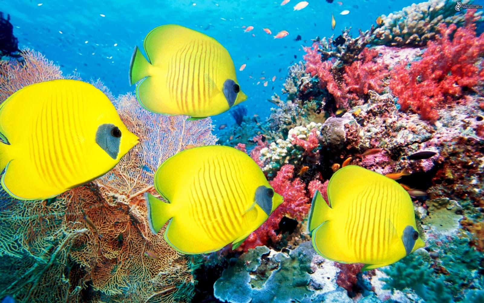 Coral reef life Fish wallpapers - beautiful desktop ...