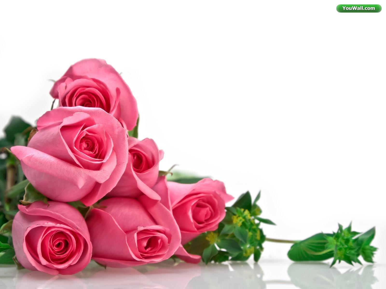 roses wallpaper desktop See To World