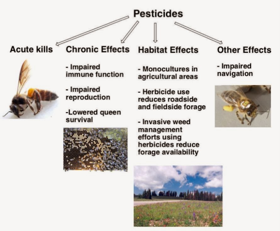 harmful effects of pesticides Here are 8 possible side effects of pesticides: cancer: for decades, there has been a great deal of concern and debate surrounding pesticides and their.