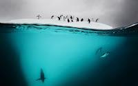Su Yüzeyinin Altında Çekilen İnanılmaz Görüntüler