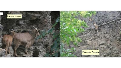 zoo-praga-capre-de-munte-si-maimute-de-stanca