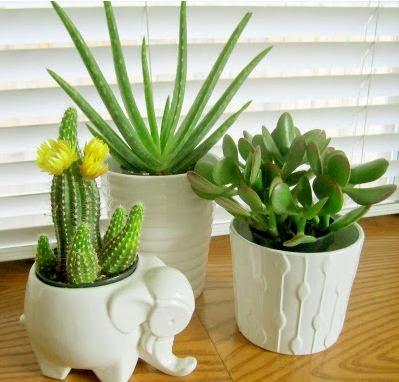 Best indoor plants suitable for your home - Suitable indoor plants ...